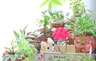 観葉植物の趣味