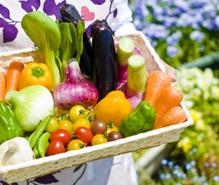 家庭菜園の趣味