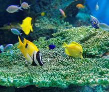 水族館めぐりの趣味