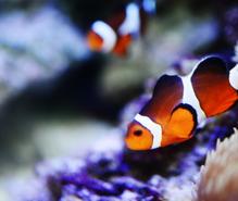熱帯魚飼育の趣味