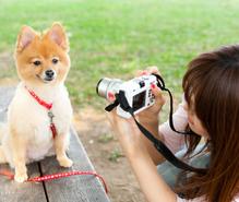 ペット写真の趣味