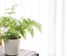 シダ植物観賞の趣味