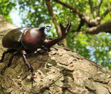 昆虫飼育の趣味