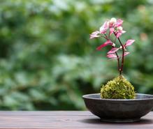 苔栽培・観賞の趣味