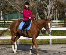 乗馬の趣味