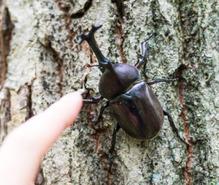 昆虫採集の趣味