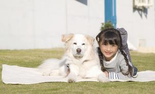 一緒に暮らしたい!カワイイ飼い犬 おすすめ5選の趣味