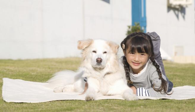 一緒に暮らしたい!カワイイ飼い犬 おすすめ5選