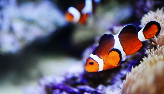 熱帯魚飼育