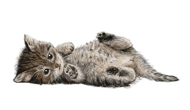 喜びも大きいネコ飼育
