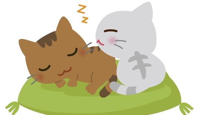猫は心に寄り添ってくれる家族
